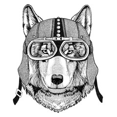 Wolf Dog Motorcycle, biker, aviator, fly club Illustration for tattoo, t-shirt, emblem, badge, logo, patch