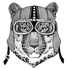 Wild cat Leopard Cat-o'-mountain Panther Motorcycle, biker, aviator, fly club Illustration for tattoo, t-shirt, emblem, badge, logo, patch