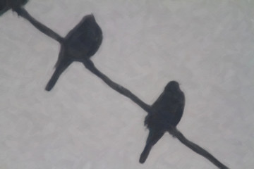 Birds perched on a wire in the cold Wyoming winter