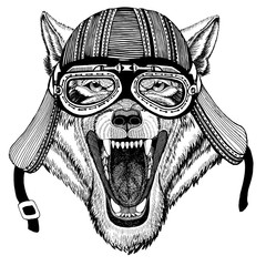 Wolf Dog Wild animal Wild animal wearing biker motorcycle aviator fly club helmet Illustration for tattoo, emblem, badge, logo, patch