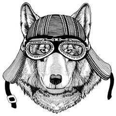 Wolf Dog Wild animal wearing biker motorcycle aviator fly club helmet Illustration for tattoo, emblem, badge, logo, patch