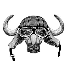 Buffalo, bull, ox Wild animal wearing biker motorcycle aviator fly club helmet Illustration for tattoo, emblem, badge, logo, patch
