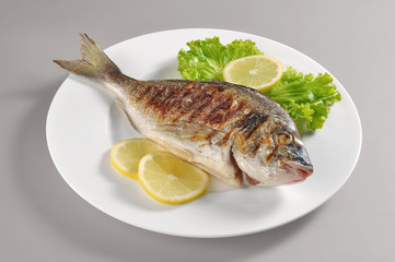 Dish with grilled fish gilthead bream