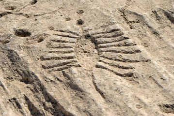 - Ancient petroglyph depicting fish or boat with oars on a rock outcrop in Jebel Jassassiyeh in Northern Qatar.