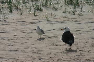 Seagulls on a beach in USA
