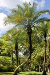 Palmier vert