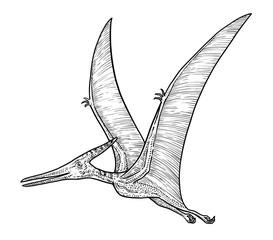 Pteranodon illustration, drawing, engraving, ink, line art, vector