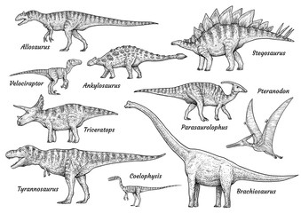 Dinosaur collection, illustration, drawing, engraving, ink, line art, vector
