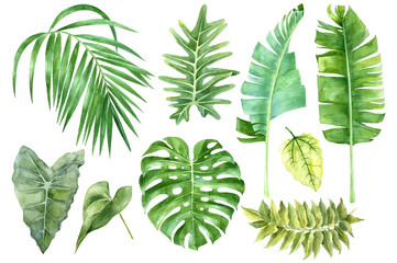 Set of tropical watercolor leaves Wall mural