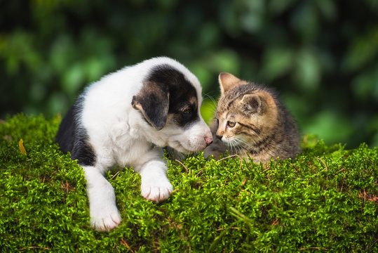 Little puppy with a little tabby kitten