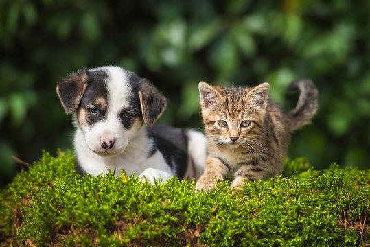Friendship of little puppy with a little tabby kitten