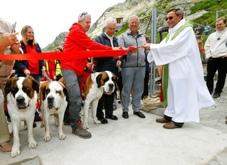 Saint Bernard dogs stand beside Jean-Michel Lonfat, Prior of the Hospice de Grand Saint Bernard, and Claudio Rosetti, director of the Fondation Barry, as they cut a red ribbon to inaugurate the new breeding station at the Great Saint Bernard mountain pass