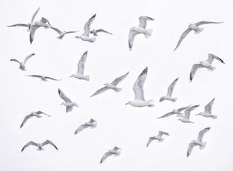 Gaviotas 2 / Seagulls 2