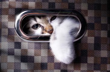 A cat plays hide and seek; Cute cat in  box