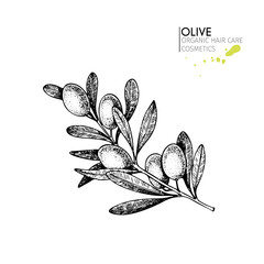 Vector set of hair care ingredients. Organic hand drawn elements. Farm market vegetables. Olive branch.