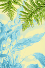 Exotic plants, green fern leaves background