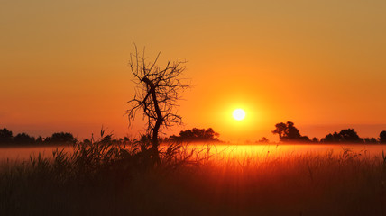 Panorama of the sunrise. The black silhouette of the dead tree and the fog over the field create a mystical picture at dawn.