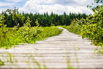 Nahaufnahme mit Blick zum Ziel über einen Steg im Sommer bei Sonne im Nationalpark Hohes Venn
