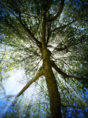 Sunburst through a tree
