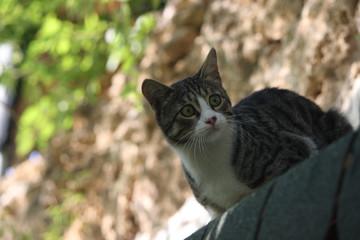 Cat, travel, katze, tiere