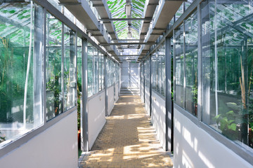 WROCLAW, POLAND - JUNE, 2017: Corridor in the greenhouse of the Wroclaw Botanical Gardens.