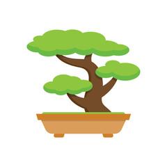 Tree Bonsai. japanese tree.