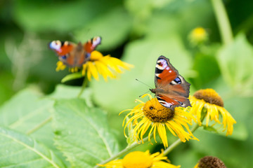 orange and black butterfly on yellow flower