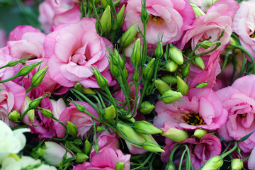 Bunch of pink and purple lisianthus gentian flowers