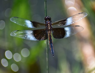 Beautiful Dragonfly In Colorful Bokeh Background