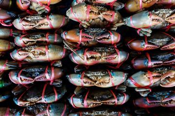 Serrated mud crab, Mangrove crab in seafood Market