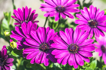 Spring Weather Arrives,flowers in bloom.
