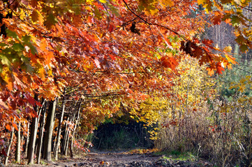 Colorful autumn in the forest, tunnel