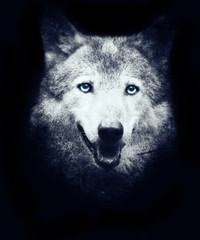 Beautiful mystical wolf face isolated on black background. Design for t-shirt print with wolf. Halloween wallpaper.