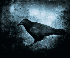 Scary wallpaper with black mystical crow. Horror grunge background for halloween concept. Design for t-shirt print.