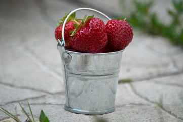 Several strawberry berries in a minimalistic iron bucket on the path