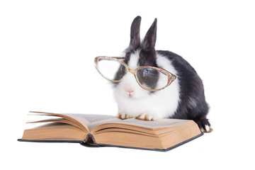 Little rabbit with glasses reading a book isolated on white