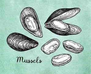 Mussels ink sketch on old paper.