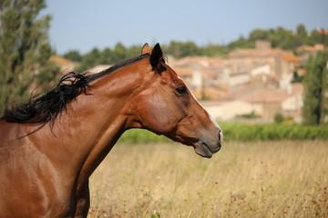 cheval de profil élégant et raffiné