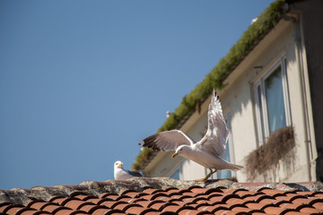 Seagulls sitting on the roof