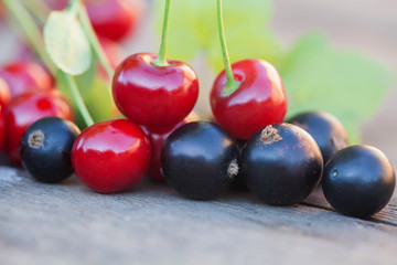 Blackcurrant red cherry berries macro view. shallow depth field photo