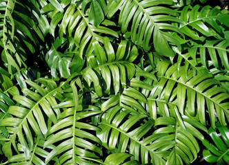 Green leaves pattern and background