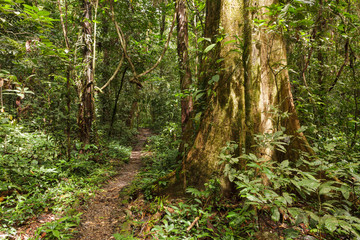 Footpath in rainforest borneo