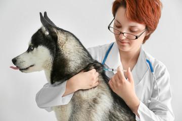 Veterinarian vaccinating husky dog on white background
