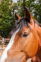 criniera del cavallo