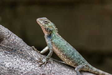 Chameleon basking in sun on a branch