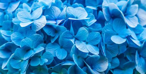 Fundo azul com flores.
