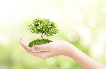 Female hand holding tree plant on nature field grass green bokeh background  ,  new life growth success ecology business financial concept