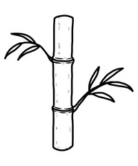 bamboo tree / cartoon vector and illustration, black and white, hand drawn, sketch style, isolated on white background.