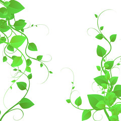 Background with beautiful foliage, branches with leaves, creeping plant, vector