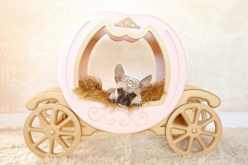 puppy on carriage with crown